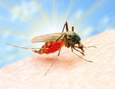 Florida, Mosquitos & Zika. How you can protect yourself!