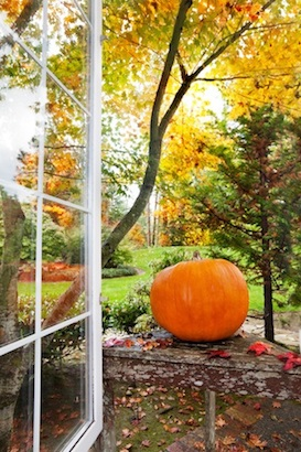 reasons to keep your windows open in Autumn.